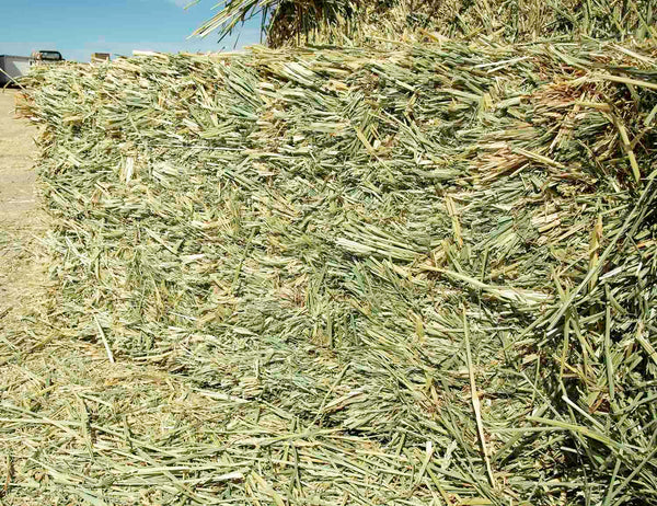 Beardless Wheat Hay For Sale-Conway Feed
