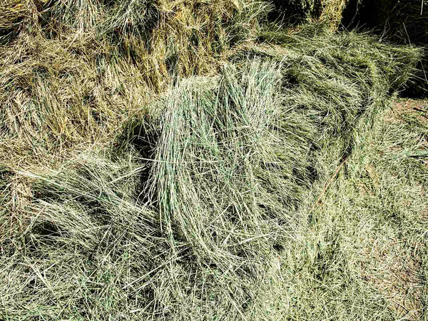 Bermuda Grass Hay For Sale-Conway Feed