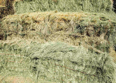 Bermuda Grass Hay For Sale.