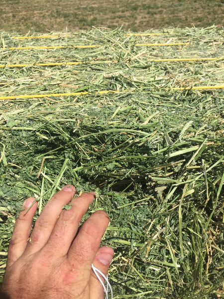 Alfalfa Hay For Sale #2-Conway Feed