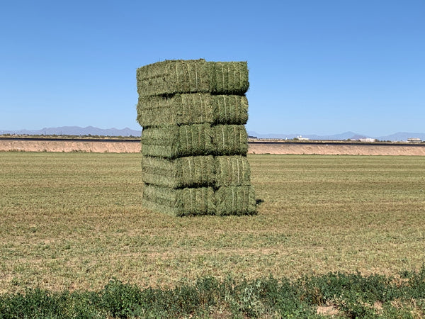 Premium Alfalfa Hay For Sale 3x4x8-Conway Feed