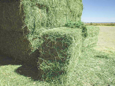 Premium Alfalfa Hay For Sale.
