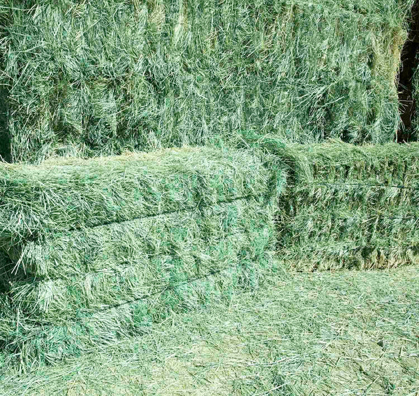 Premium Teff Hay for sale-Conway Feed