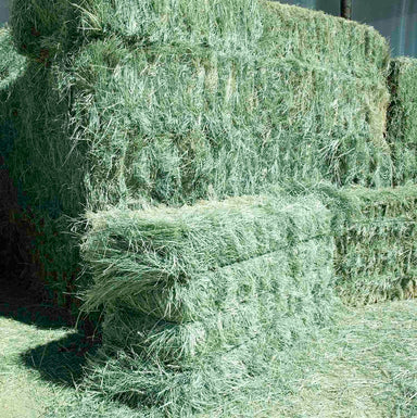Premium Teff Hay for sale.