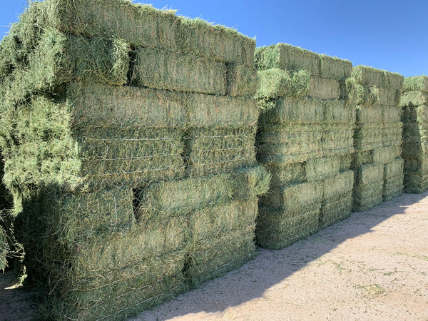 Premium Alfalfa Hay For Sale-Conway Feed