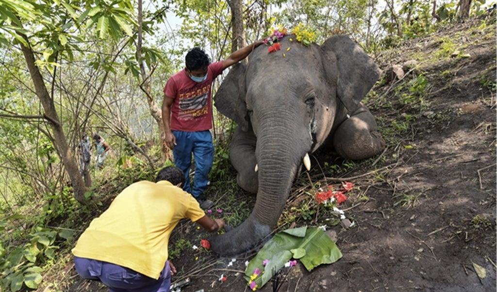 In India, 18 elephants found dead: they were struck by lightning
