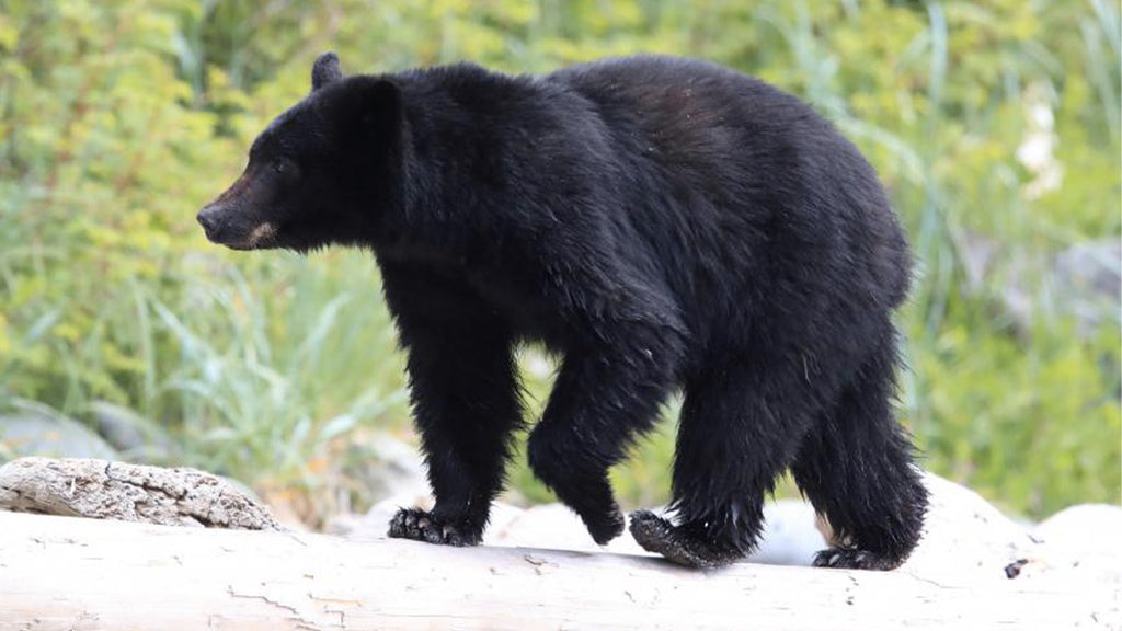 44-year-old mother killed by bear while calling her father
