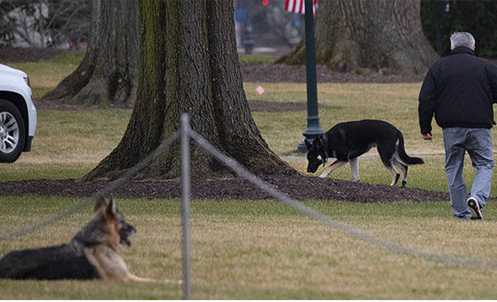 Biden: his dogs were expelled from the White House after a biting incident