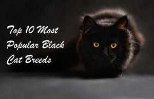 Top 10 Most Popular Black Cat Breeds