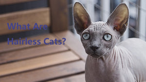 9 Funny Things You Might Not Know About Hairless Cats