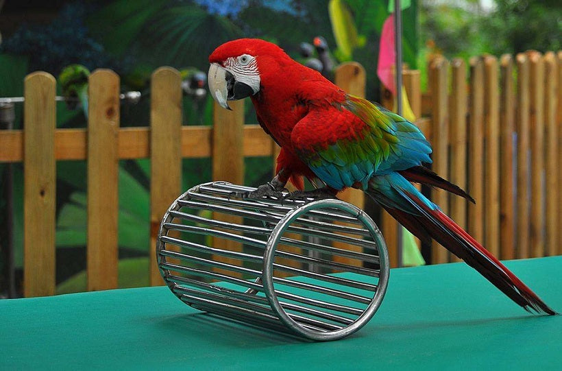 A Basic Guide to Tame a Parrot for New Owners