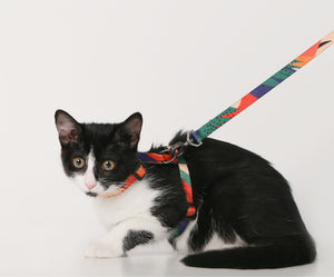 Colorful Cat Harness - happyandpolly