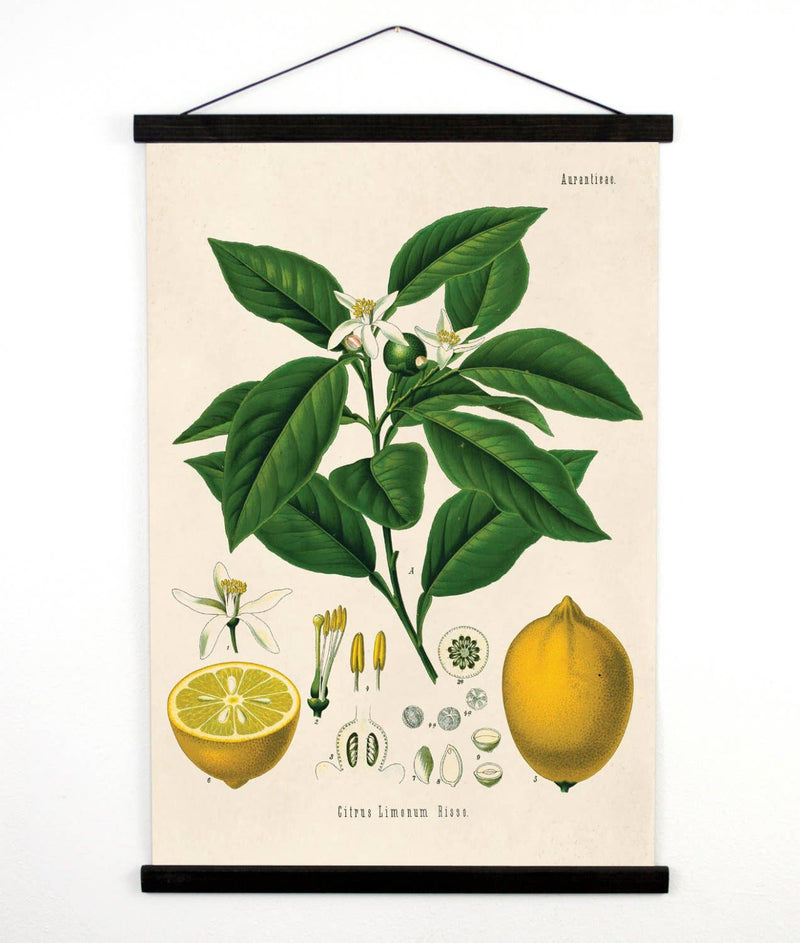 Lemon Canvas Wall Hanging Print 13x17