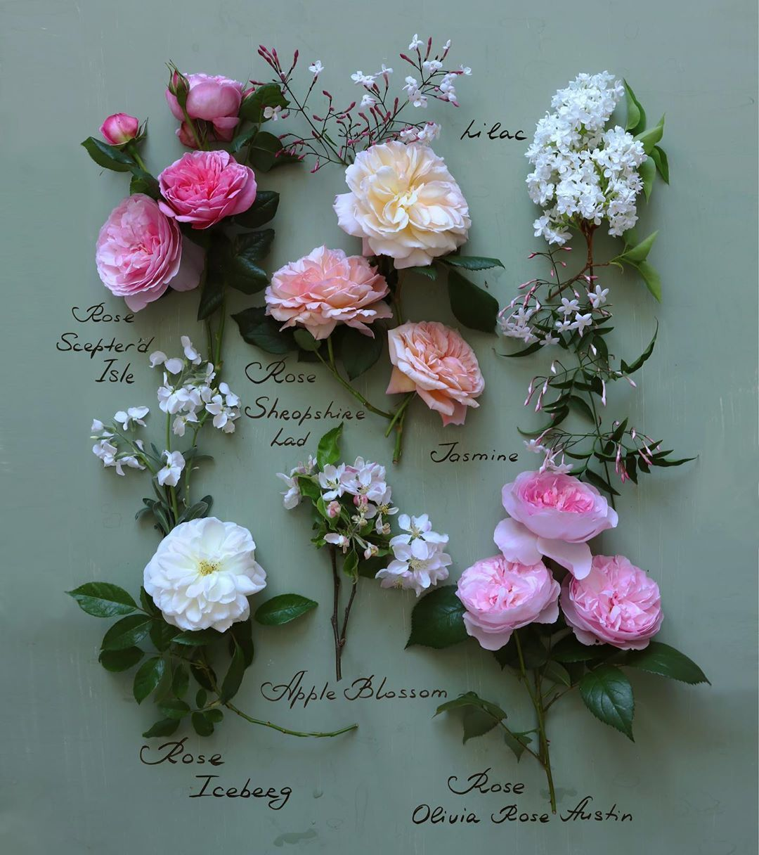 rose, lilac, and jasmine flowers