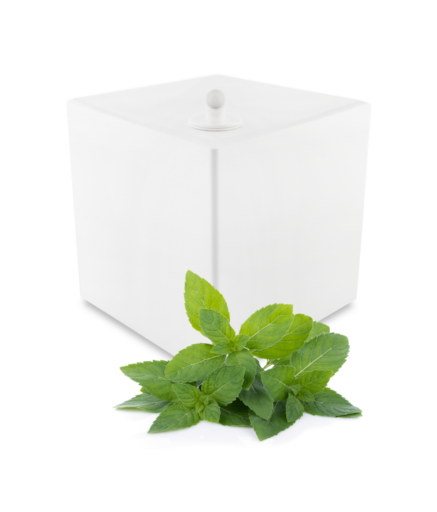 Profumatore + Fragranza Cucumber Mint