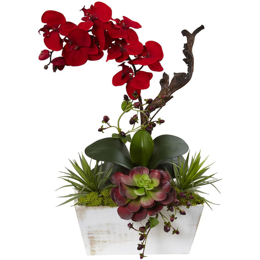Attractive and elegant silk flowers and plants birds eye blue seasonal orchid succulent garden wwhite wash planter mightylinksfo