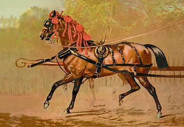 State Carriage Horse 20x30 poster