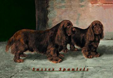 Two Champion Sussex Spaniels 20x30 poster