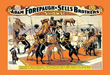 A Troupe of Champion Great Danes: Adam Forepaugh and Sells Brothers Great Shows Consolidated 20x30 poster