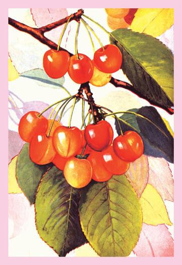 Cherries 28x42 Giclee on Canvas