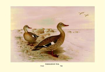 Madagascan Teal 28x42 Giclee on Canvas