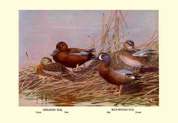 Cinnamon and Blue-Winged Teals 28x42 Giclee on Canvas
