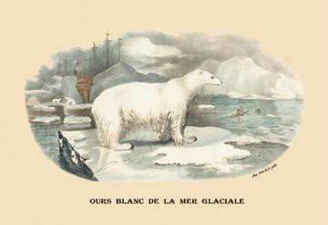 Ours Blanc de la Mer Glaciale (Polar Bear) 28x42 Giclee on Canvas