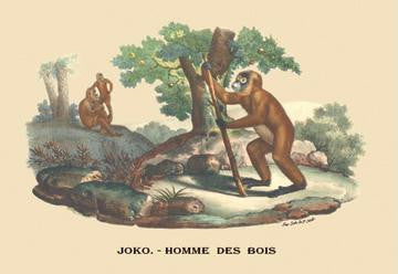 Joko - Homme des Bois (Monkey) 28x42 Giclee on Canvas