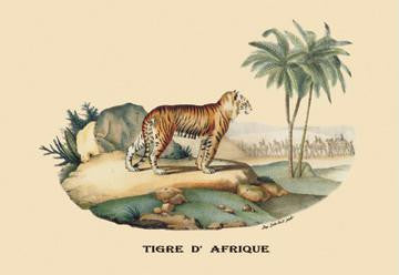 Tigre d'Afrique (Tiger) 28x42 Giclee on Canvas