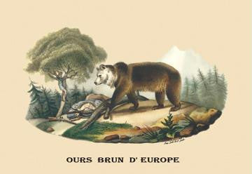 Ours Brun d'Europe (European Brown Bear) 28x42 Giclee on Canvas
