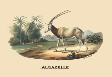 Algazelle (Gazelle) 28x42 Giclee on Canvas