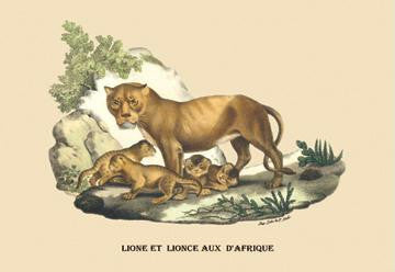 Lion et Lionne d'Afrique 28x42 Giclee on Canvas