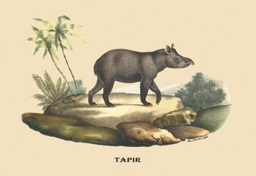 Tapir 28x42 Giclee on Canvas