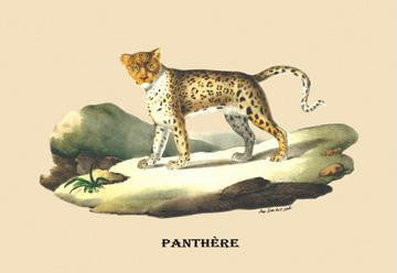 Panthere (Panther) 28x42 Giclee on Canvas