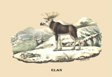 Elan 28x42 Giclee on Canvas