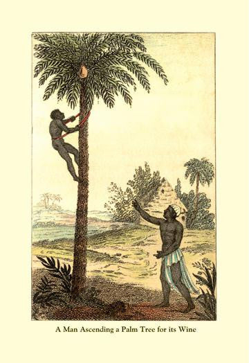 A Man Ascending a Palm Tree for Its Wine 12x18 Giclee on canvas