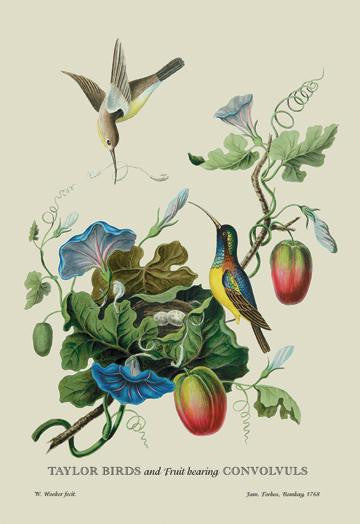 Taylor Birds and Fruit Bearing Convolvuls 12x18 Giclee on canvas