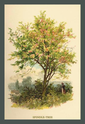 Spindle Tree 12x18 Giclee on canvas