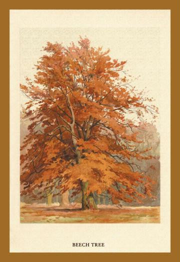 The Beech Tree 12x18 Giclee on canvas