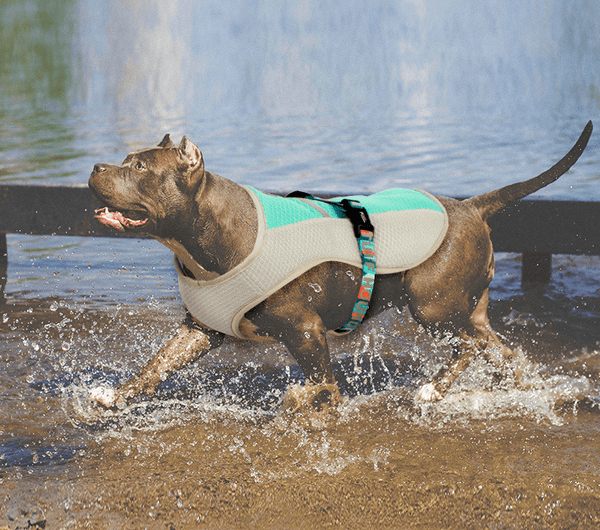 Fully Adjustable Dog Cooling Vest - Dogs and Cats Boutique
