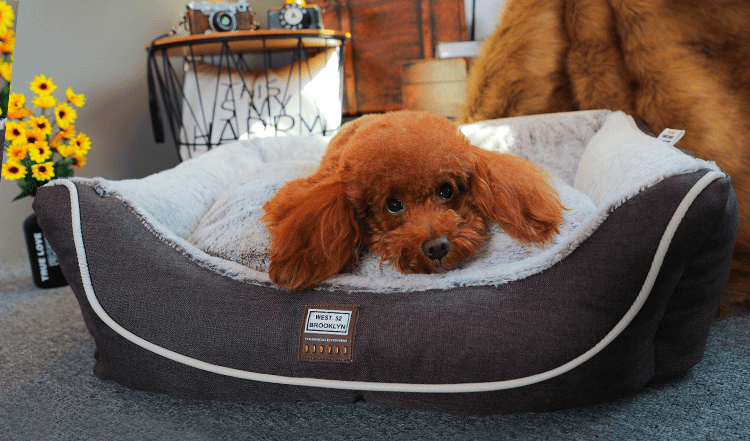 Soft And Plushy Dog Bed - Dogs and Cats Boutique