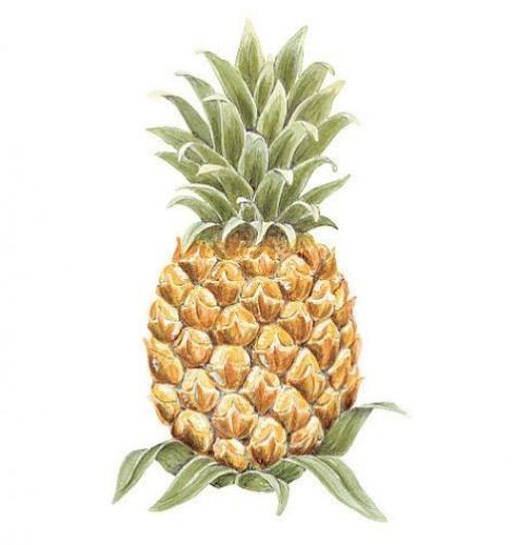 Pineapple Wallies Wallpaper Cutouts