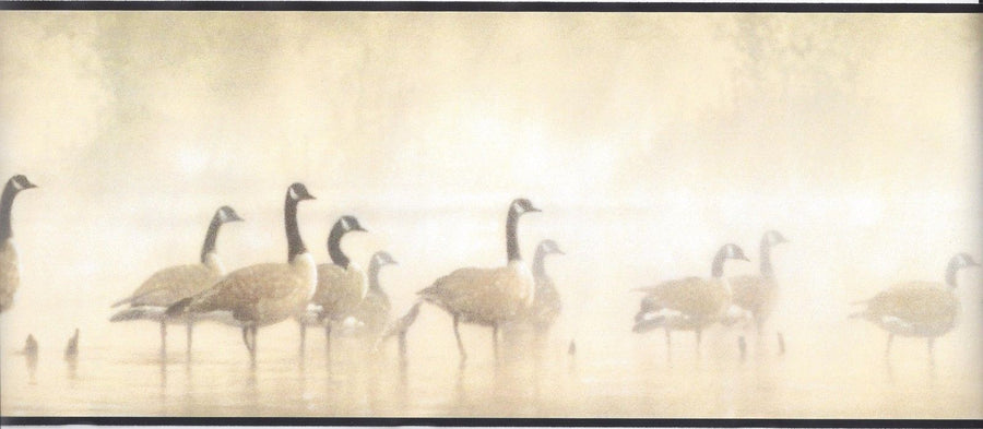 Gaggle of Geese Walking in the Early Dawn Mist with Black Edge Wallpaper Border - all4wallswall-paper