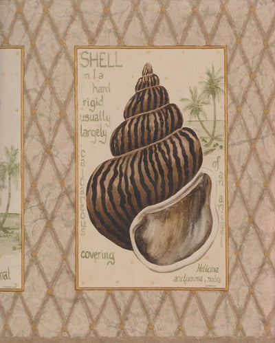 Shells Squared on Brown Diamond Wallpaper Border - all4wallswall-paper