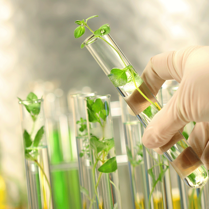 ORGANIC INGREDIENTS FROM GREEN CHEMISTRY
