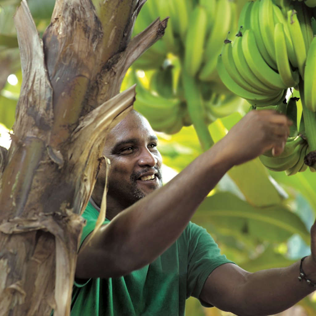 THE BENEFITS OF THE BANANA TREE FOR RADIANT SKIN
