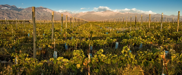 Wine Tasting in the Andean Foothills of Argentina