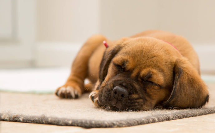 Dog Sleeping Positions That Reveals Your Dogs Health