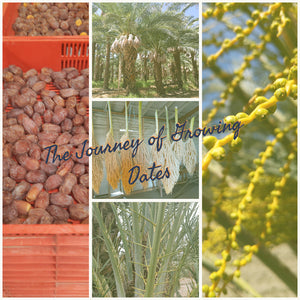 The Journey of Growing Dates
