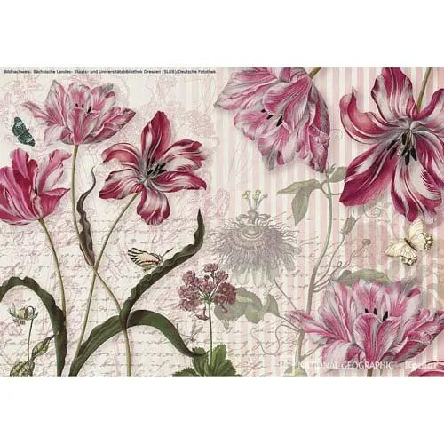 National Geographic Merian Flower Floral Wallpaper Mural - Pink - 3.68 x 2.54 m - Set of 8 Pieces